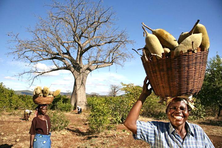 RAW Ekologiskt Baobabpulver 6