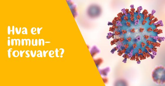 Hva er immunforsvaret? 2