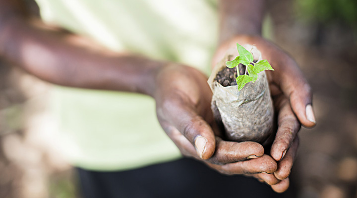 Glimja planterar träd i Afrika 6