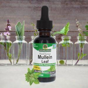 Mullein-beauty-shot-700x700-1-300x300.jpg