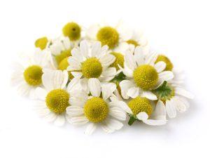 chamomile-1-300x225.jpg