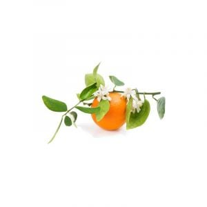 citrus-and-orange-blossom-300x300.jpg