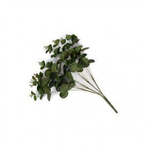 eucalyptus-kvist-300x300.jpeg