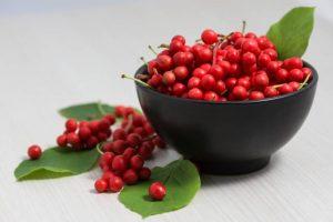 schisandra-berries-300x200.jpg