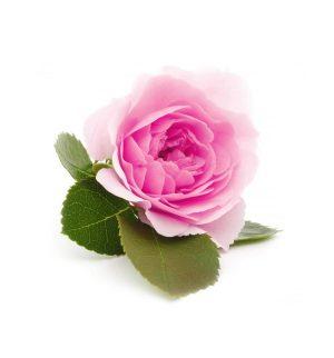 SN_Damascus_Rose_1024x1024-300x322.jpg