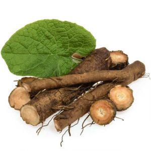 top-quality-wholesale-organic-burdock-root-radix.jpg_640x640-300x300.jpg