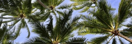 Kokosnektar