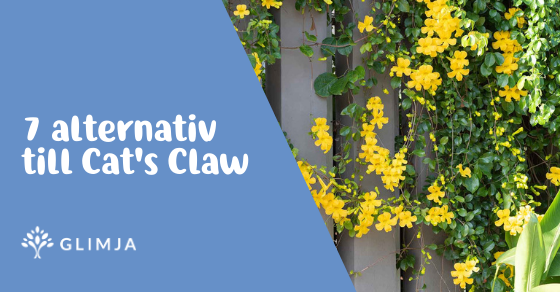 7 alternativ till Cat´s Claw 2